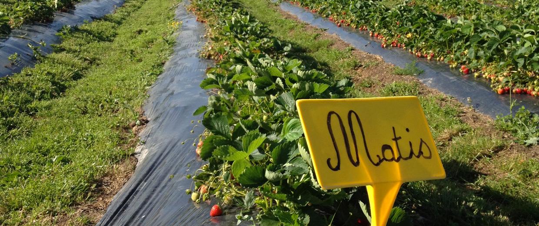 « Agriculture, Environnement et Circuits courts »