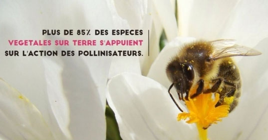 Interdiction des pesticides : « Oui, les alternatives non chimiques existent pour l'agriculture » La fondation Hulot prône l'interdiction totale des néonicotinoïdes. © Twitter Fondation Hulot