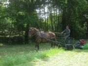 Faire à cheval