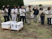 Transhumance des abeilles