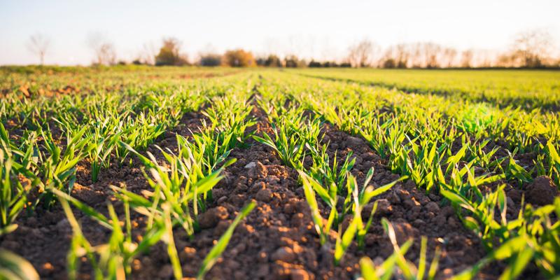 Journée mondiale des sols à Poitiers