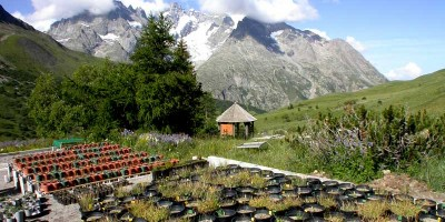 Jardin du Lautaret